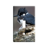 Belted Kingfisher - Bird Light Switch Plate Cover