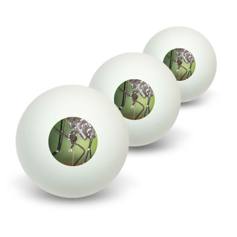 Asian Tiger Mosquito Bug Novelty Table Tennis Ping Pong Ball 3 Pack