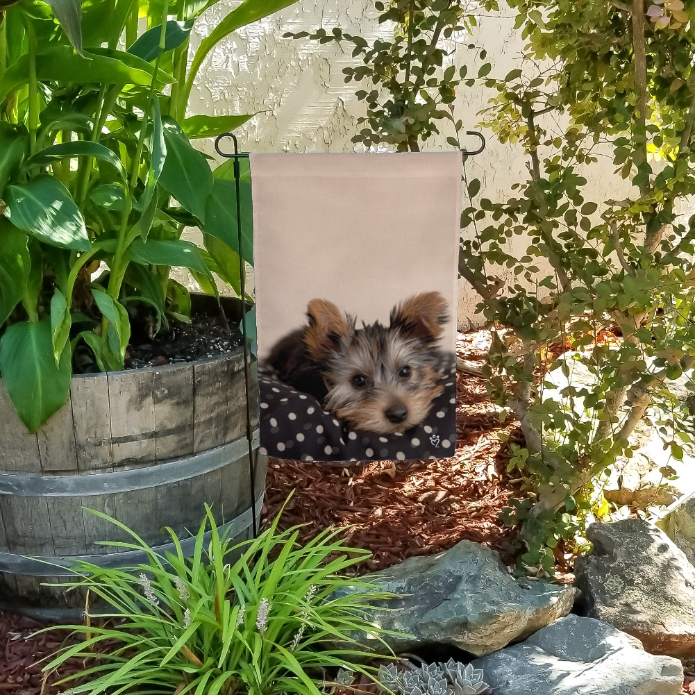 Yorkie Yorshire Terrier Puppy Dog On A Spotted Cushion Garden Yard