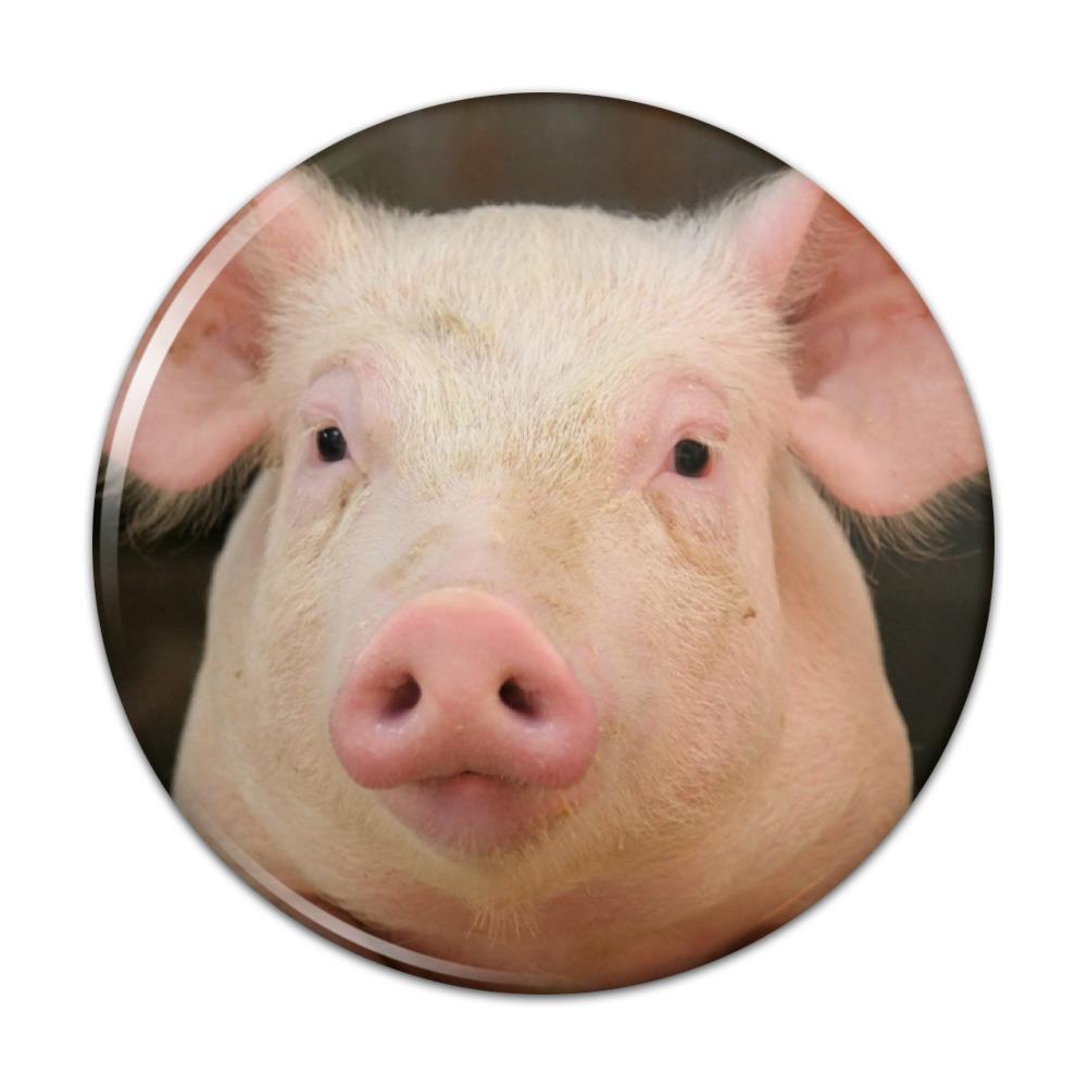 Little Pig Piggy Compact Pocket Purse Hand Cosmetic Makeup