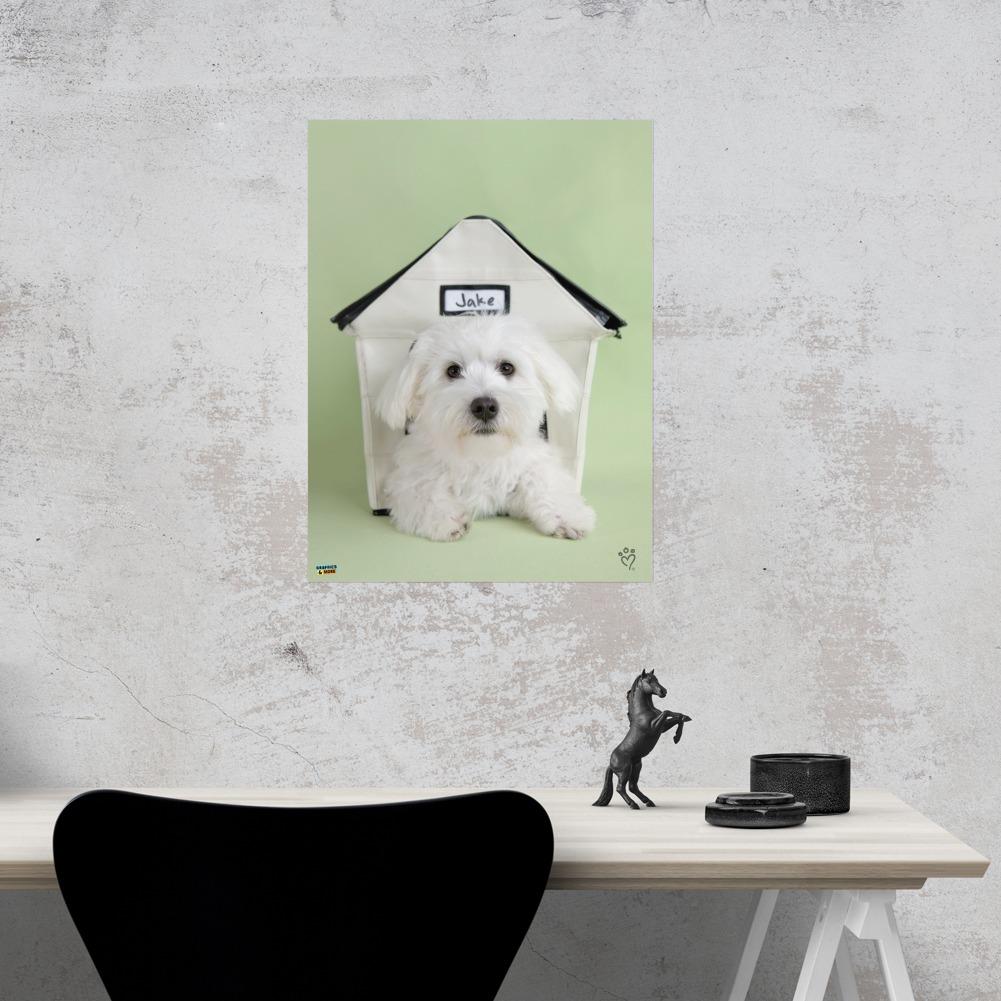 bichon frise maltese puppy dog in house home business office sign ebay rh ebay com dog in house sticker dog in house sticker