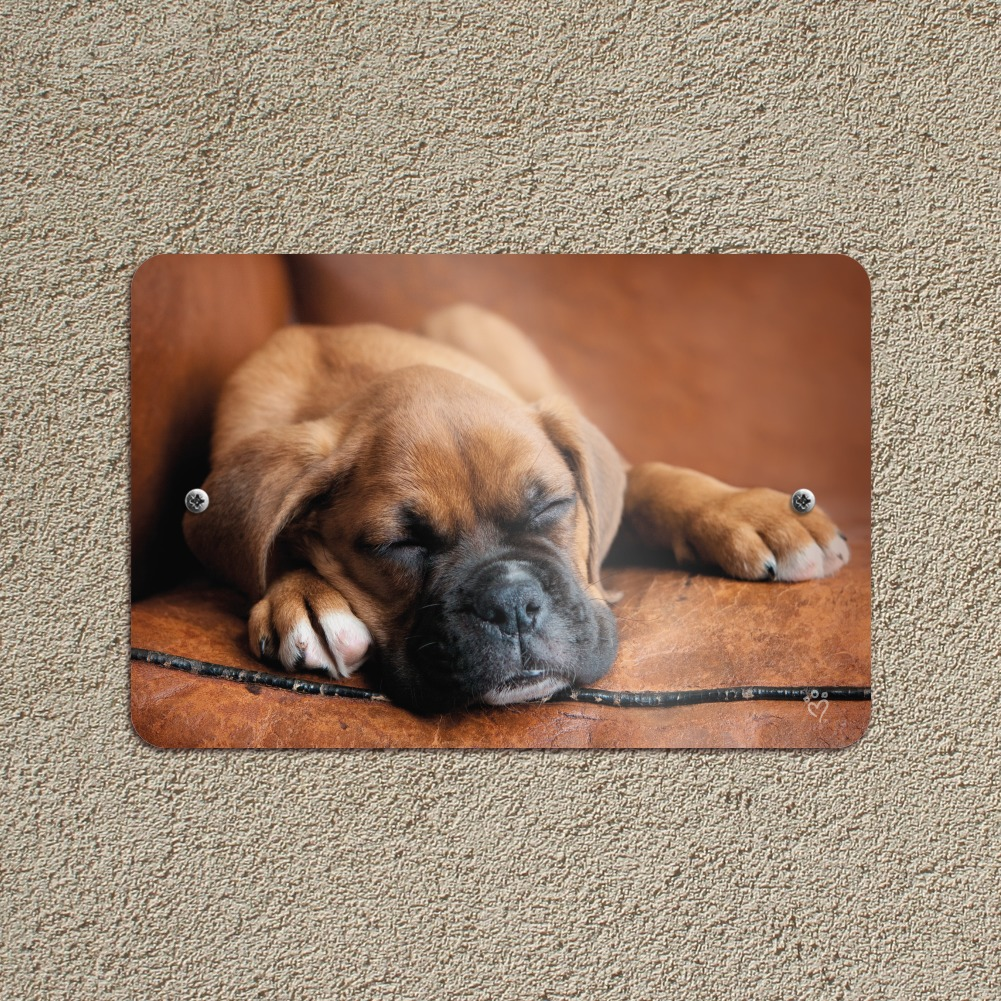 Boxer Puppy Dog Sleeping in Leather Chair Home Business Office Sign