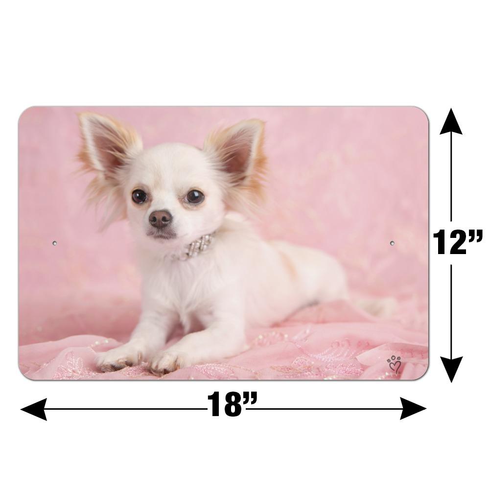 Havanese Puppy Dog Cute Sitting Animal Photo Poster 12x18 inch
